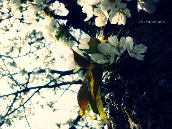 L'été arrive, et la vie devient facile...