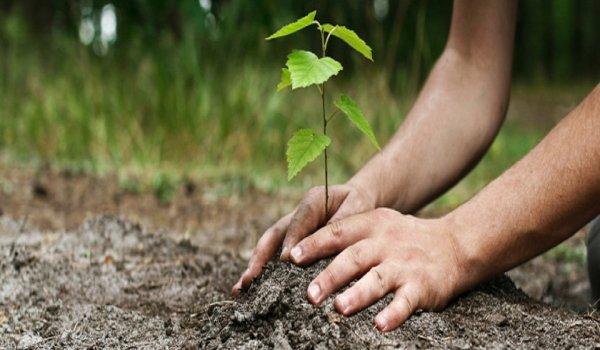 Chaque arbre est le symbole vivant de la paix et de l for Plante un arbre
