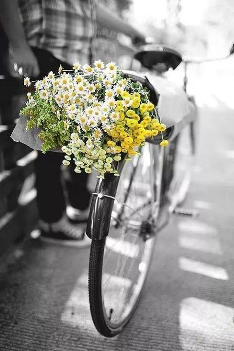 Pour une ville en couleur, il faut des fleurs !
