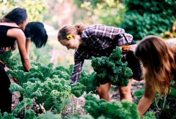 Peuples du monde Citoyens sans frontières ; Pour une autonomie locale : Transition alimentaire