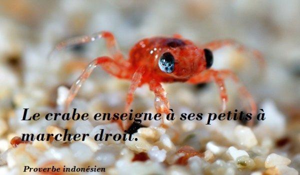 Le crabe enseigne à ses petits à marcher droit .