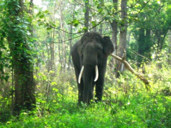 Si tu ne trouves pas d'ami sage, prêt à cheminer avec toi, résolu, constant, marche seul, comme un roi après une conquête ou un éléphant dans la forêt.