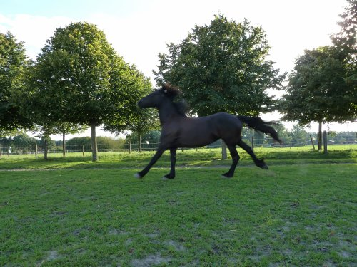 Centre equestre de spectacle , voltige et cirque !