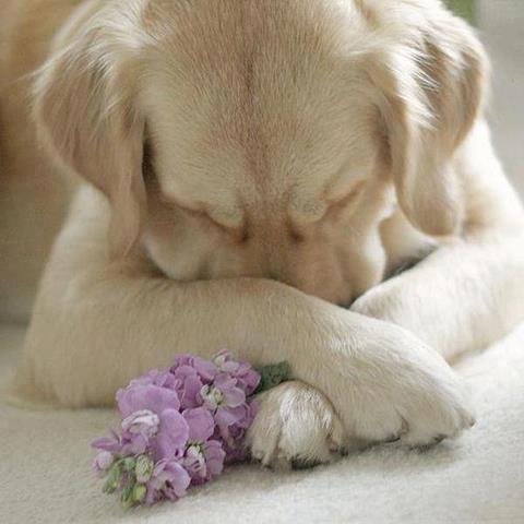 ama a quien te valora, no quien te haga sufrir...