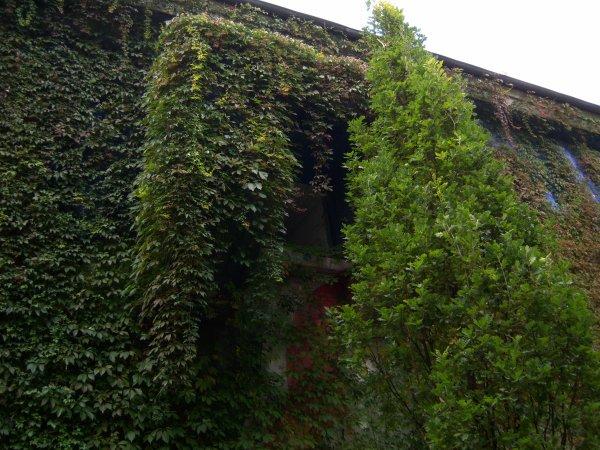 Bunker de Bochum Gerthe cinq cent mètres plus loin je suis né  un Dimanche a 6 heures du matin dans l'Hopital «Maria de notre salut «Mariahilfskrankenhaus  et tout les Cloches de notre Église sonnaient ,