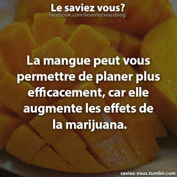 Saviez-vous cela sur la mangue ?