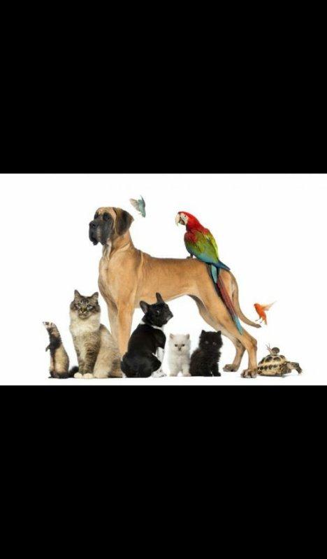 Les animaux ❤
