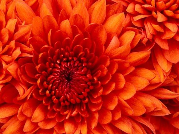 ma fleur preferer