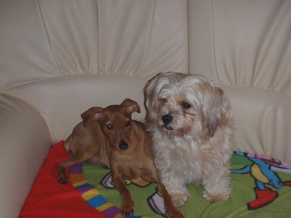 voici mes 2 chiens.