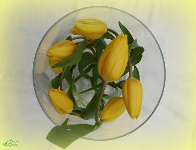 Méli-mélo de tulipes