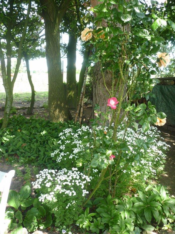 Jardin (2)