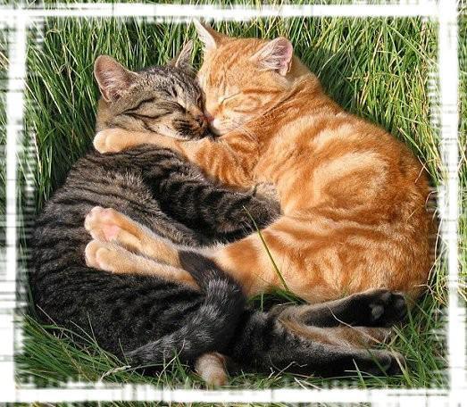 deux chats qui se font un calin