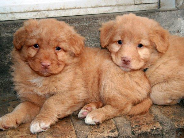 deux chiots tout mignon