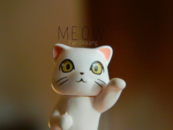 Meow. ღ