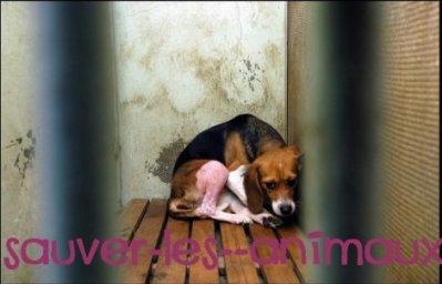 la maltraitance sur animaux!!!