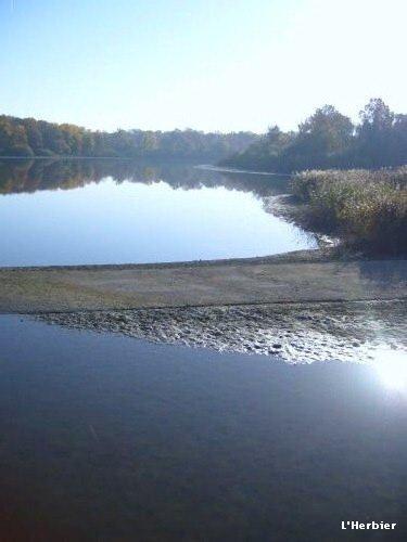 Paysage du lac du Der-Chantecoq (52)