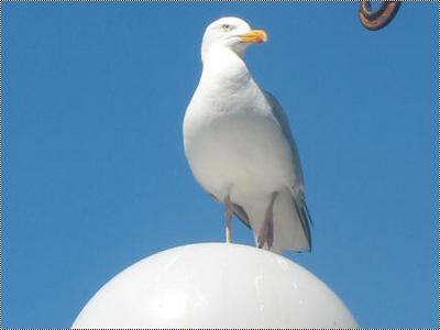 J'aimerais être un oiseau (écrit le 28.04.2011)