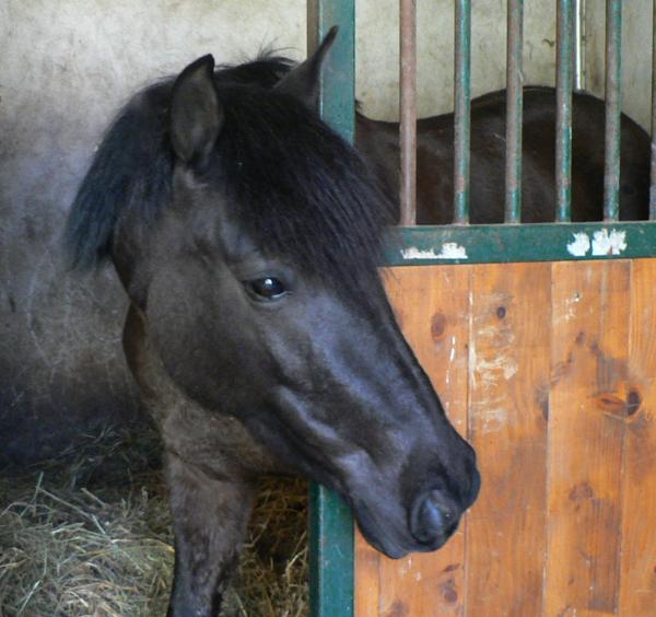 .  « L'histoire entre l'homme et le cheval ne s'explique pas » .