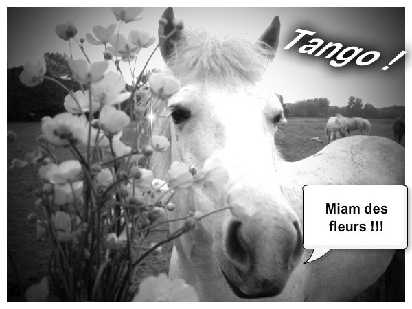 tango <