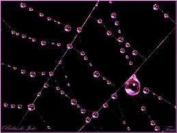 Des perles de rosée