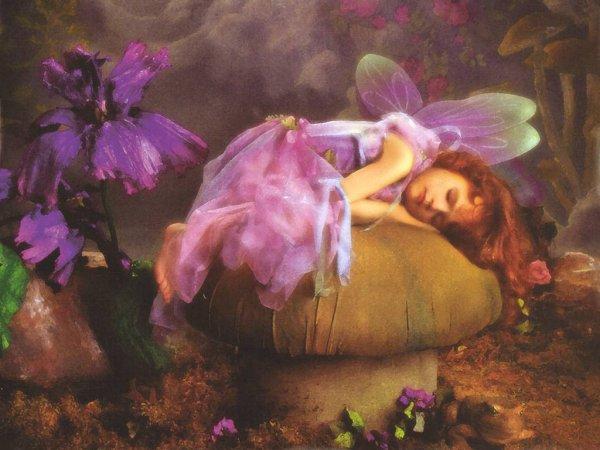 Vole, Vole, mon Amour, petit papillon velours
