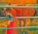 Photo de bebe-horses03