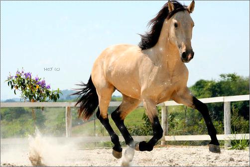 « Vous ne pouvez demander a n'importe qui de devenir votre ami. Le cheval, il suffit simplement de le lui demander, mais demandez le lui vraiment .   »