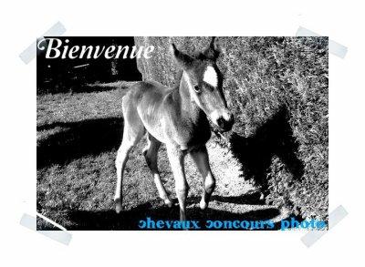 Bienvenue sur Chevaux-Concours-Photo