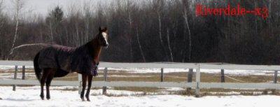 1er thème : Le cheval au naturel .