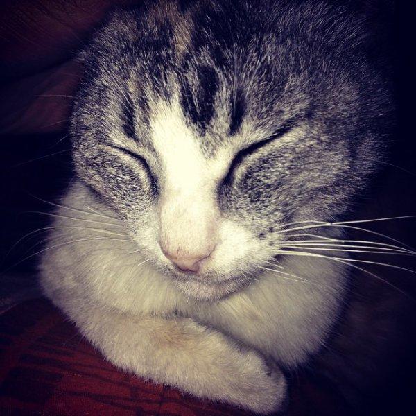 Elle c est Marjza Zomer ;) Elle a 3 chattons!
