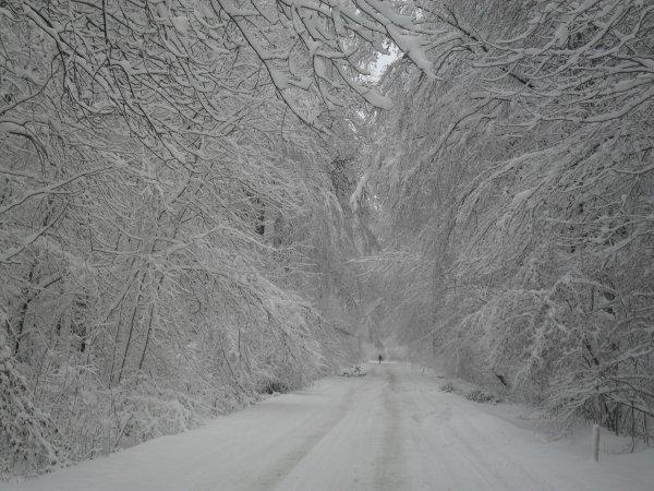 le bois du duc a 500 metres chez moi se matin le 20/112/2010