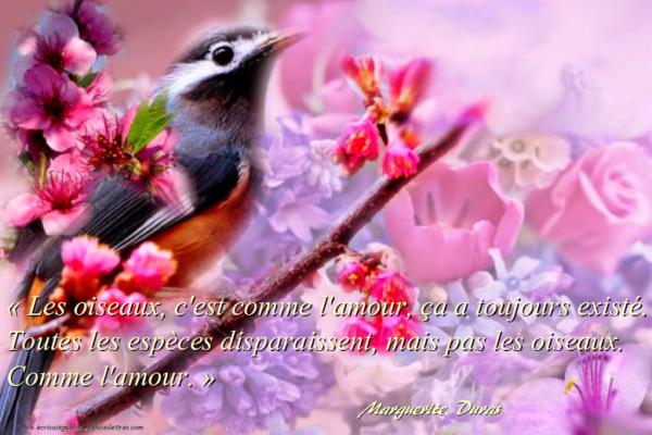 En écoutant les oiseaux -La langue des oiseaux de la langue des anges.