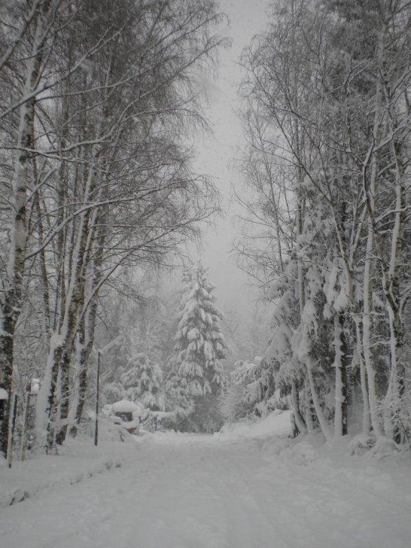 neige de janvier 2016