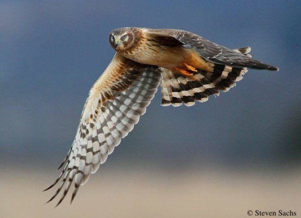 photos du site de : HawkWatch International (HWI)
