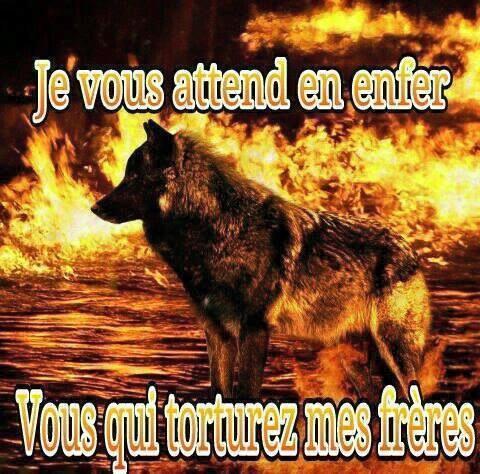 l'enfer pour les loups