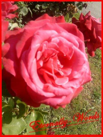 ~ eternally-words ~ Définition D'aimer ~ eternellement des mots