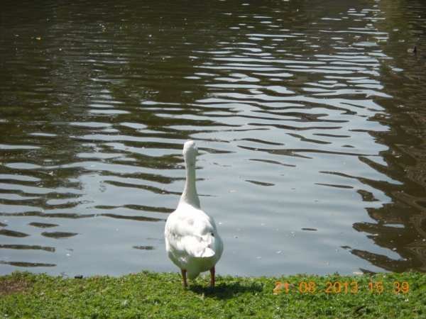 21.08.2013 - Le parc du château d'Estaimbourg