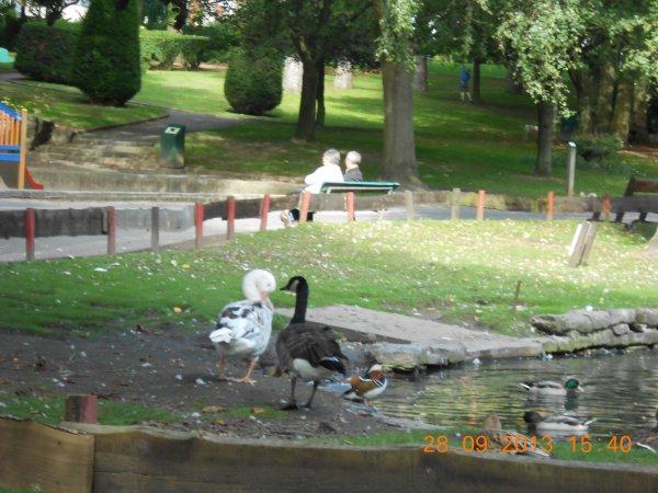 28.09.2013 - Au parc communal de Mouscron (2)