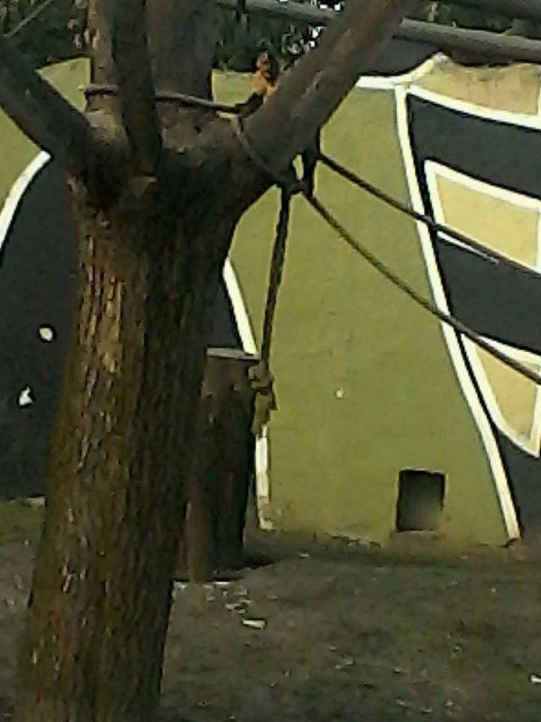05.04.2015 - Journée à Bellewaerde (3)