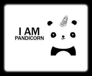 ☆ PANDICORN ☆