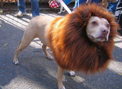 Le roi de la jungle ??