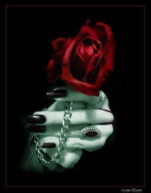 rose de bienvenue