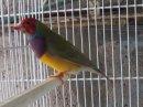 Photo de oiseaux-exotique62