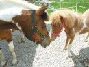 Photo de sirius-horse