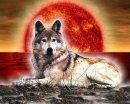 Photo de intruder35