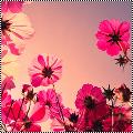 Théme : Fleurs