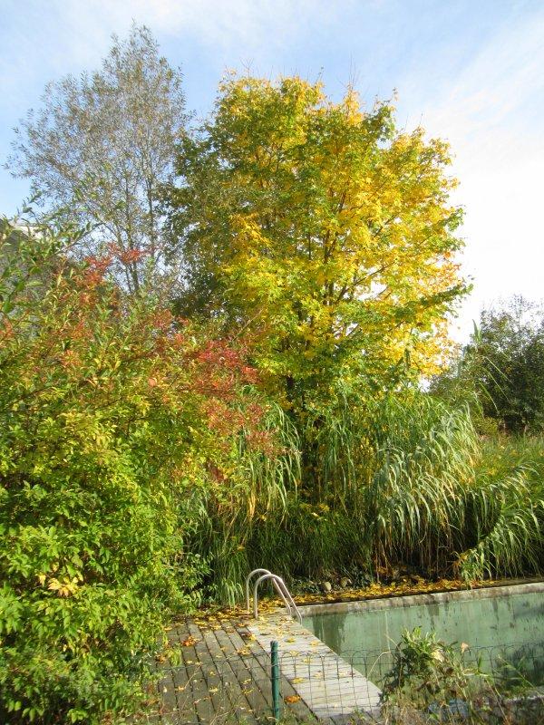 Automne/ Herbst 2013