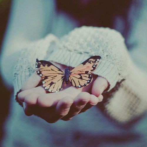 Sensation Papillon ...