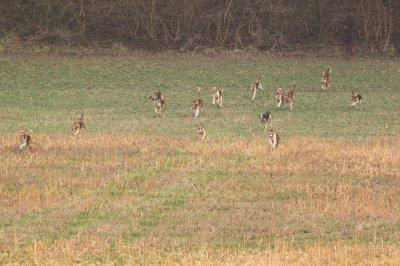 chasse a courre du 22 fevrier 2011