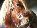 Photo de horselove56